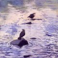 Dippers, River Mardle, 2005